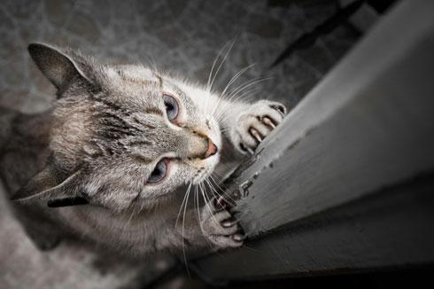 kapıyı tırmalayan kedi