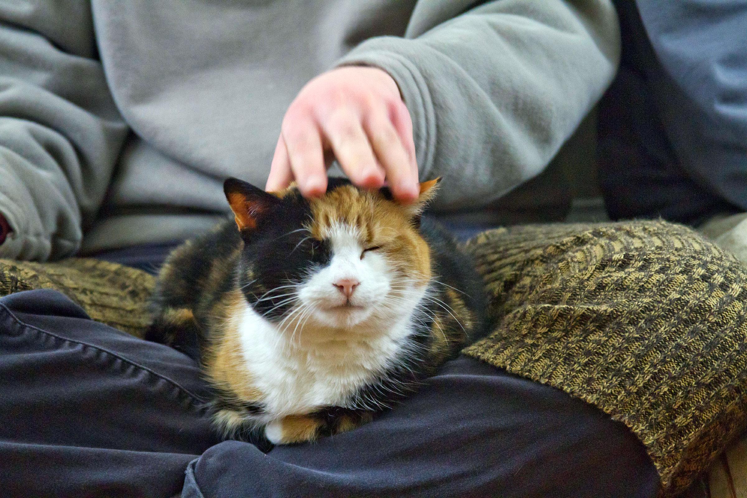 kedi mırıltısının faydaları