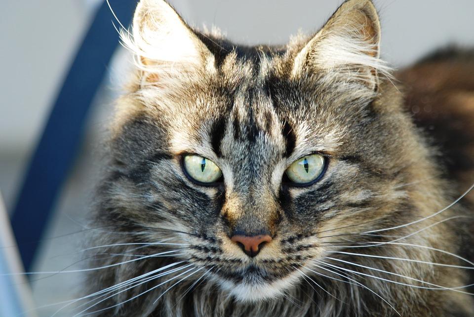 kedileri-asla-cezalandırmamanız-için-6-neden