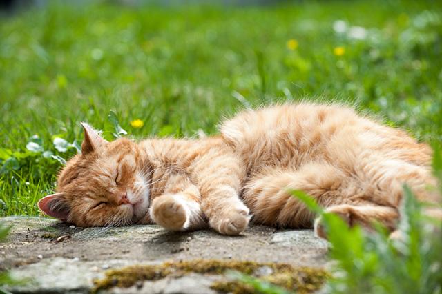 9500 Yaşındaki İlk Evcil Kedi