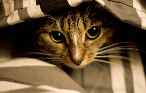 korkmuş-kedi