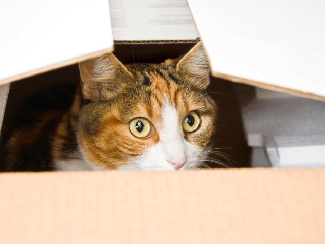 saklanmış kedi