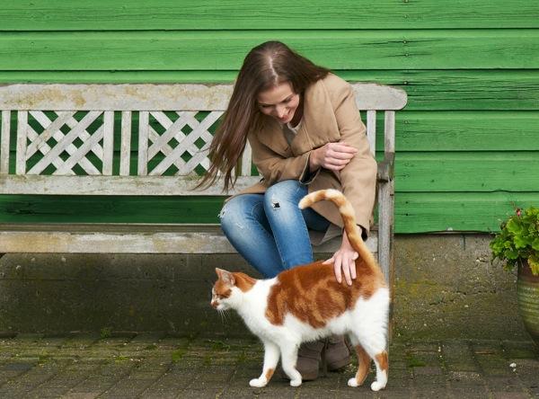 soru işareti şeklinde kedi kuyruğu