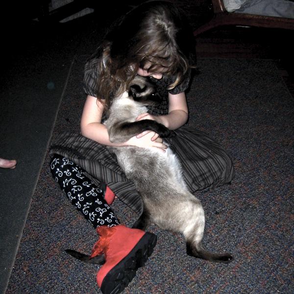 ucu seğiren kedi kuyruğu