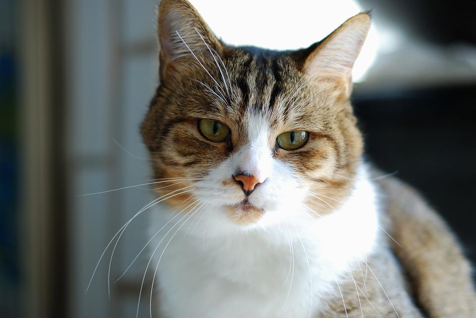 üzgün-kedi