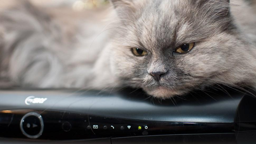 şişko-kedi