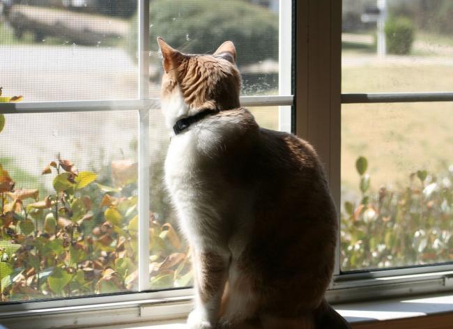 camdan-bakan-kedi