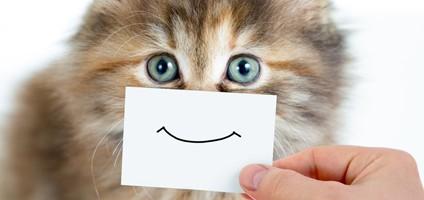 Kedileri gülümsetmenin 5 yolu