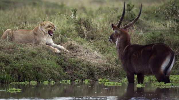 Korku, hayvanların hayatta kalması için gerekli bir duygudur.