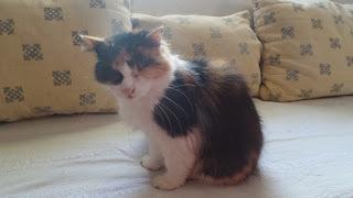 İşte ailemizin gözleri olmayan tatlı üyesi tonton kedi Ray :)
