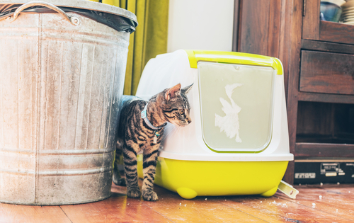kedi-kum-kabı