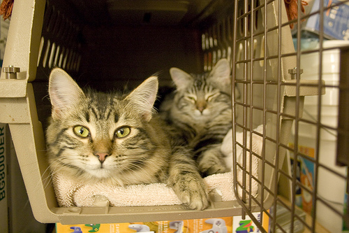 kedi-kutusunda-oturan-kediler