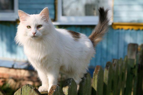 Kedinizin kuyruğu hakkında bilmeniz gereken 4 gerçek