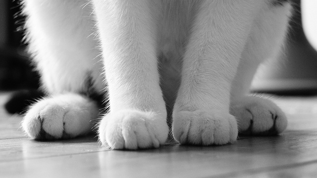 kedi-patileri