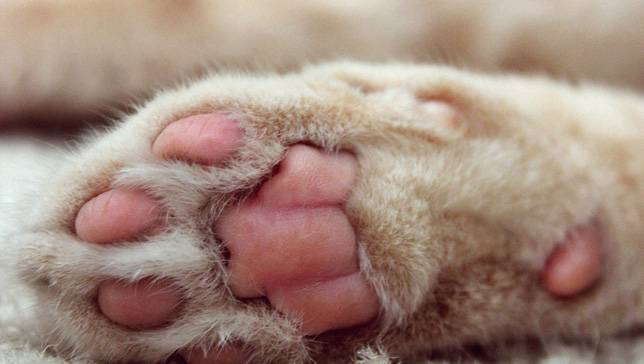 kedi-patisi-2