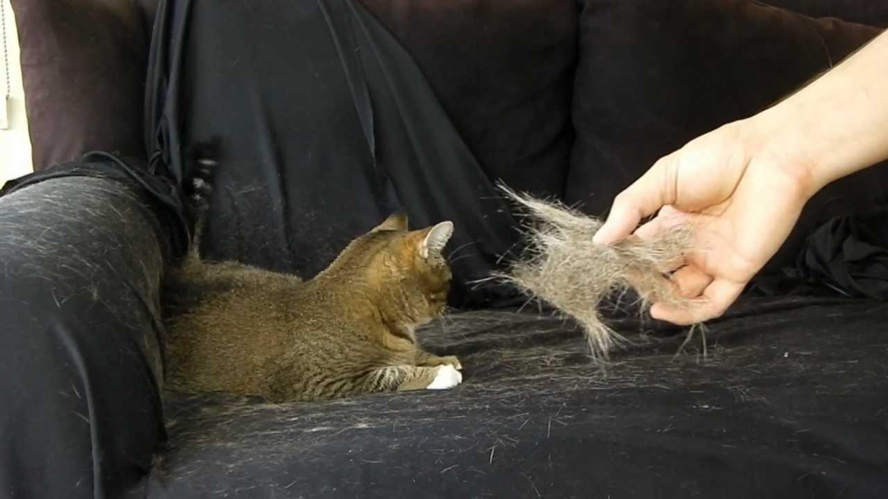 kedi-tüyü