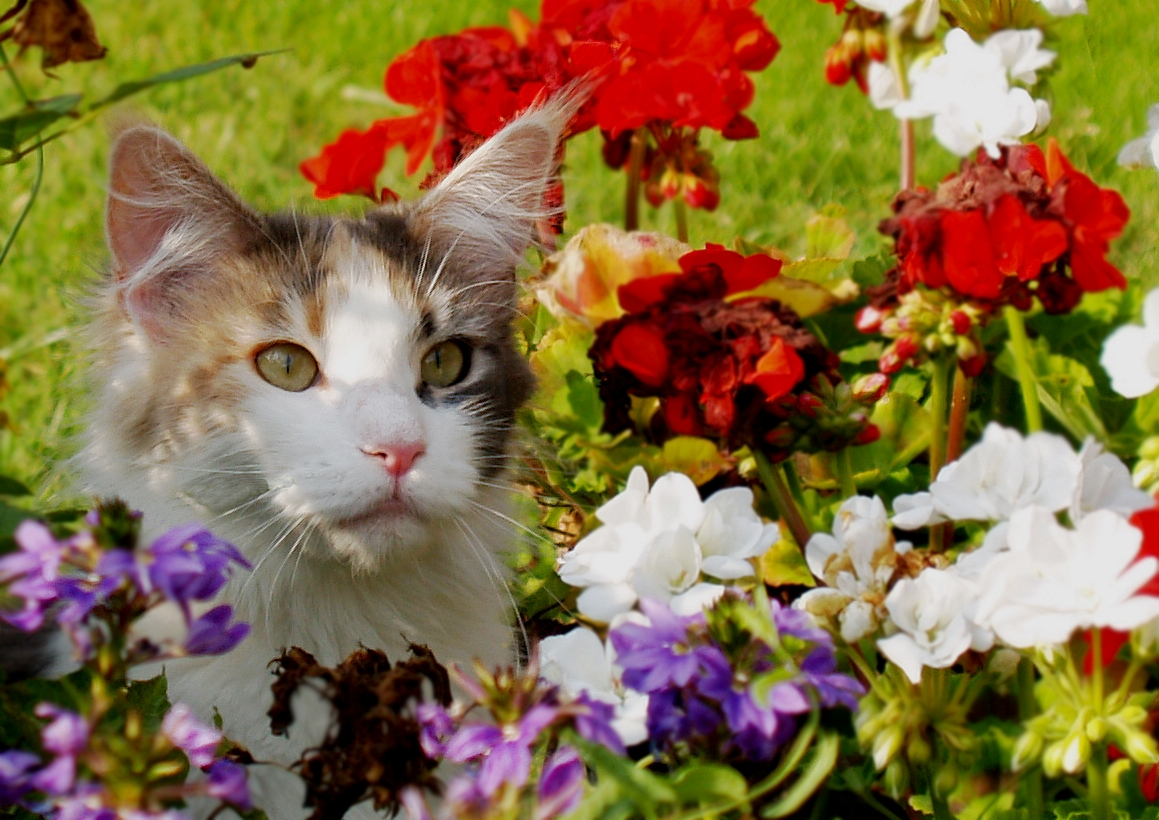 Kediler İçin En Zehirli 8 Bitki