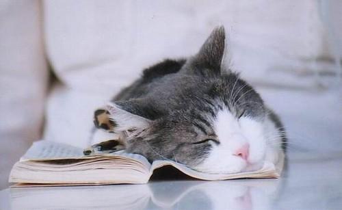 kediler-rüya-görür-mü-2