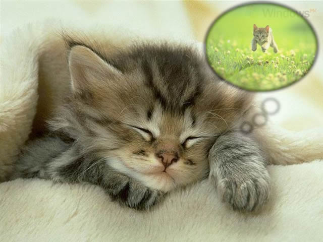 kediler-rüya-görür-mü