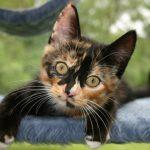 Evinizi kediniz için tehlikeli hale getiren 5 şey
