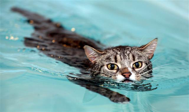 kediler-yüzer-mi