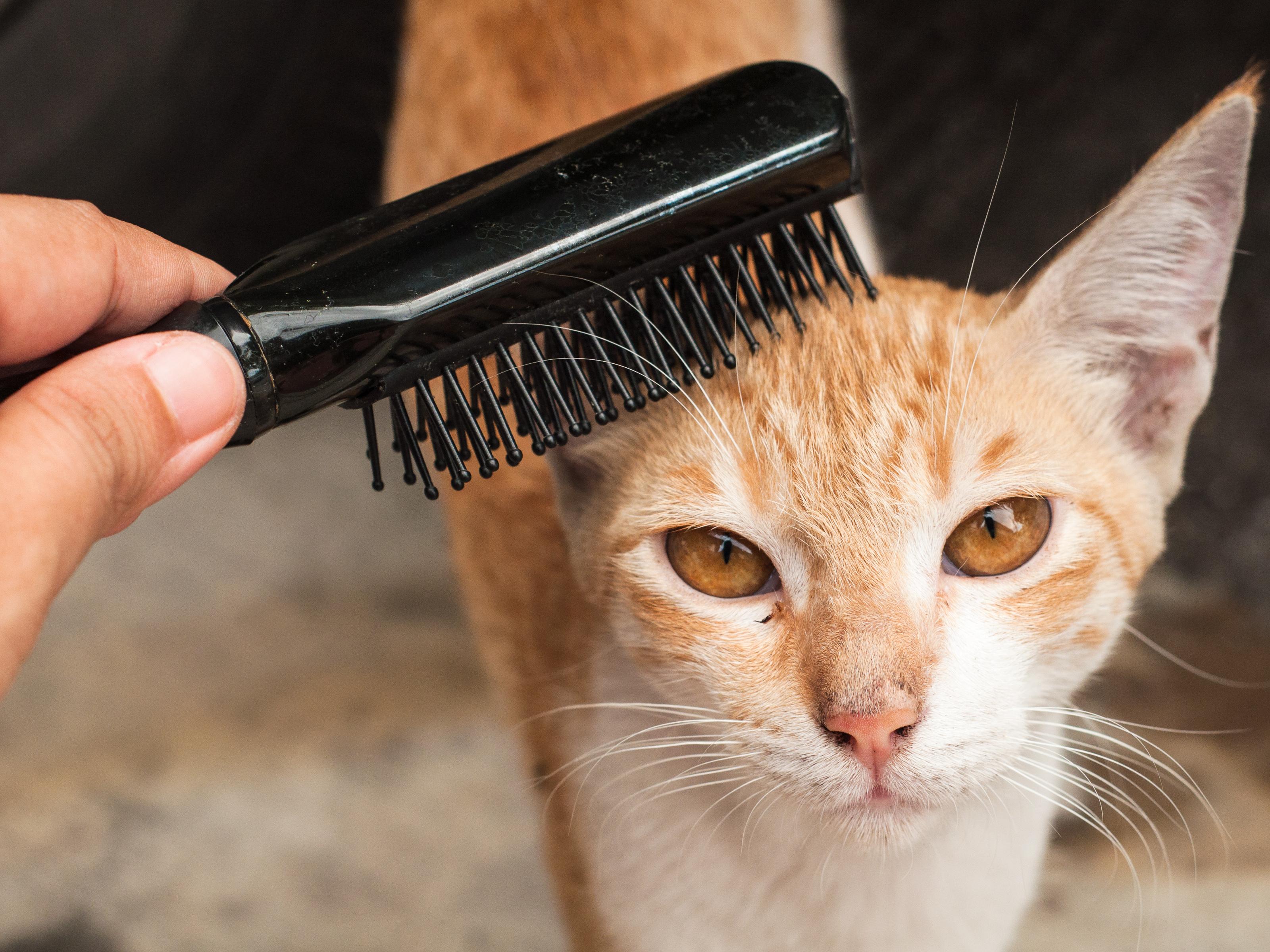 Kedinizin Sizi Daha Çok Sevmesini Sağlamanın 5 Yolu