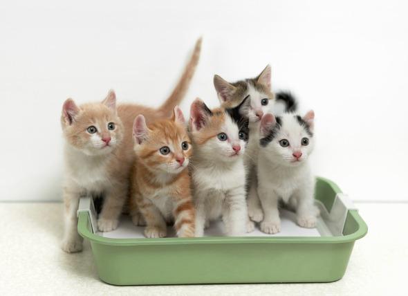 kum-kabındaki-kediler