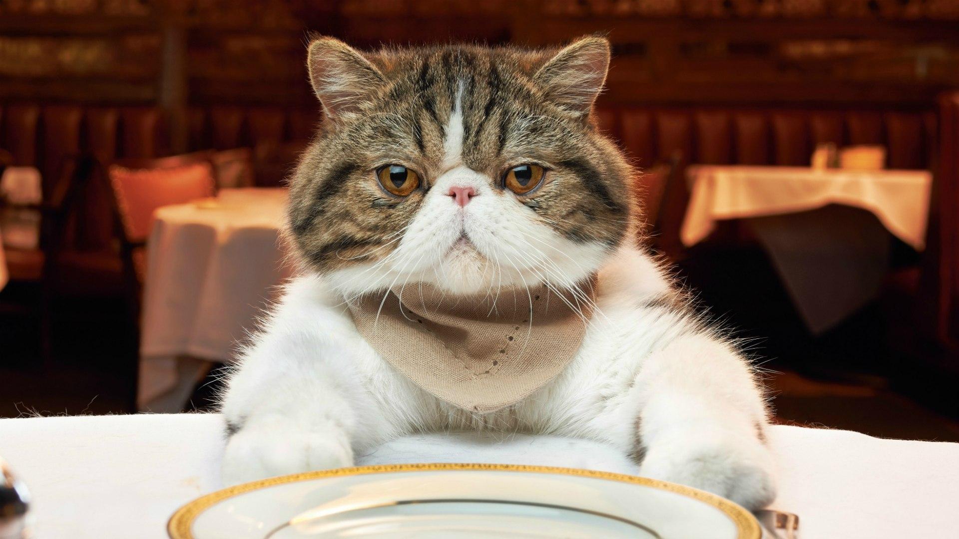 masada-oturan-kedi