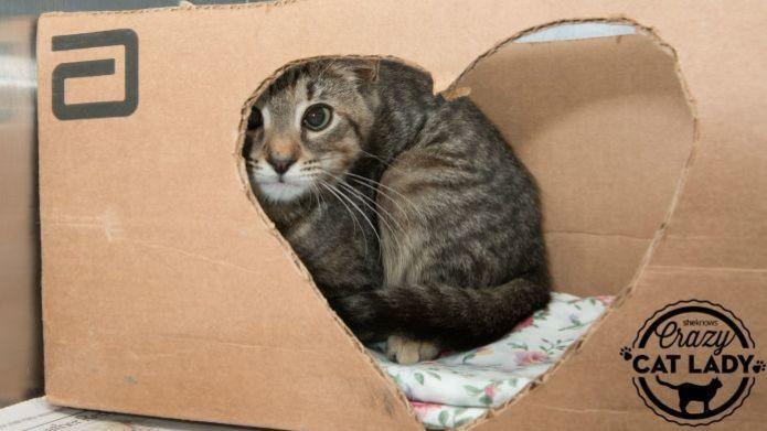 saklanmış-kedi