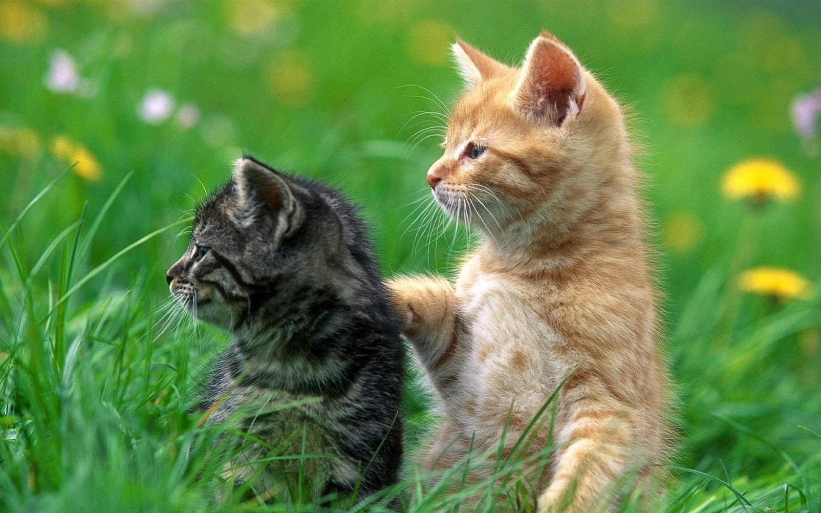 Bir oğlanın kedi yavrusuna nasıl ad verilir