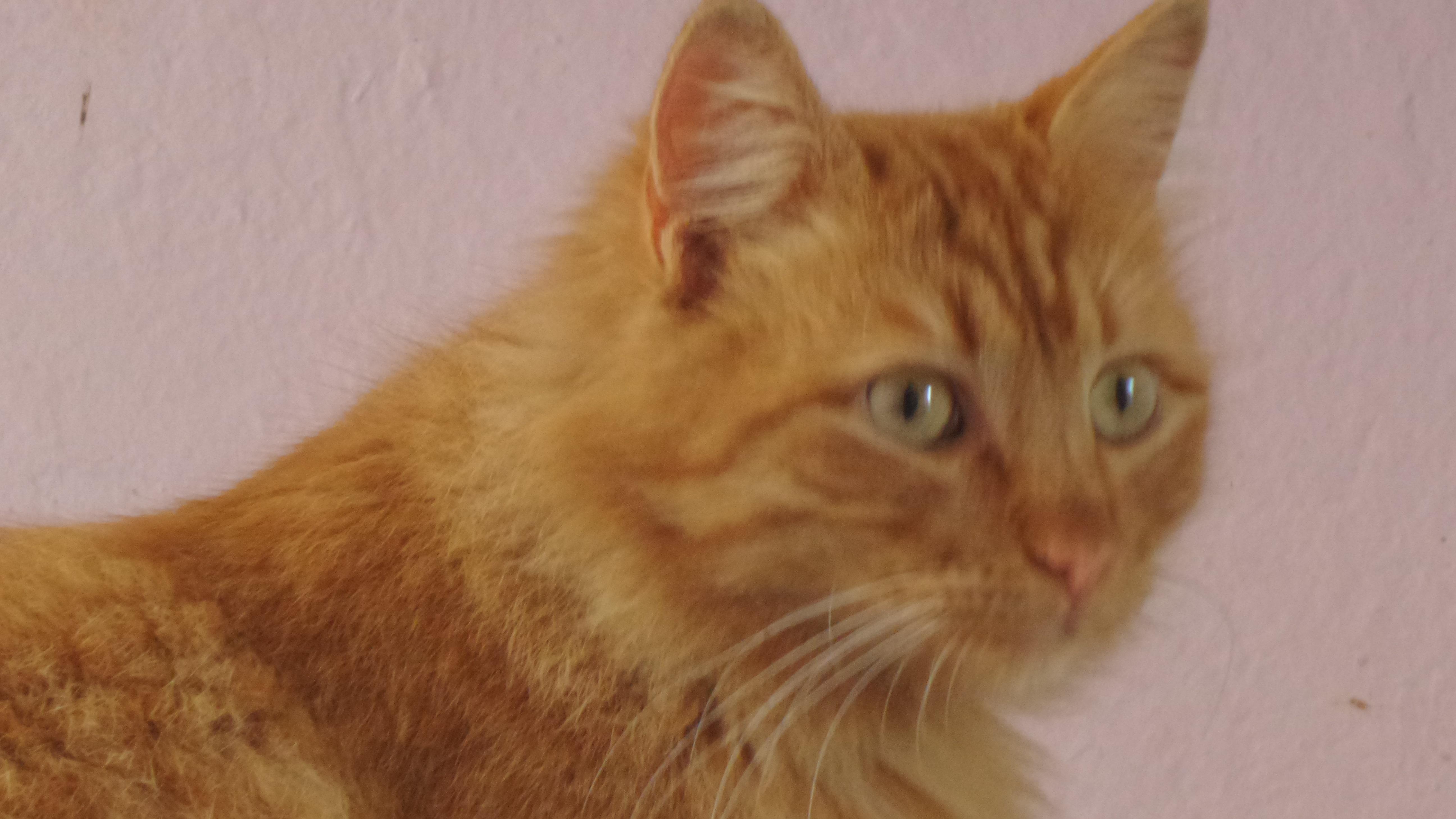 Türkiye'de 15 Milyon Kişi Evini Kedilerle Paylaşıyor 36