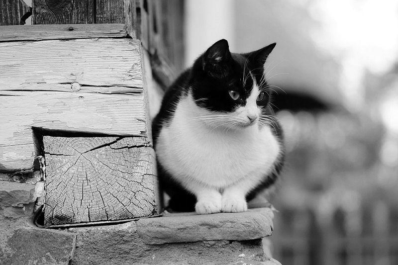 smokinli-kedi-3