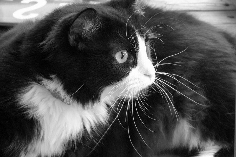 smokinli-kedi-5