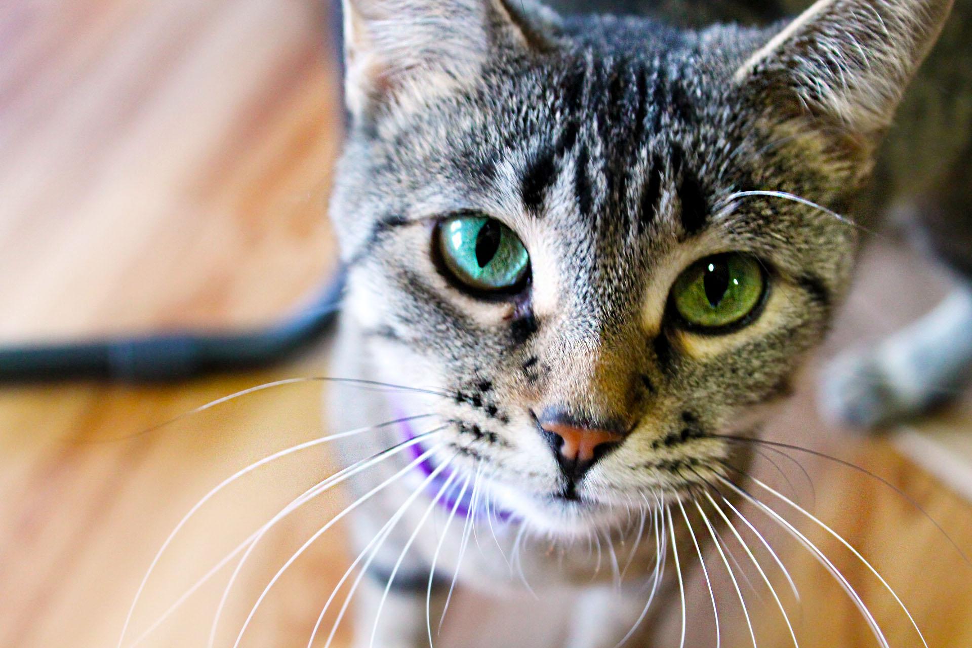 Türkiye'de 15 Milyon Kişi Evini Kedilerle Paylaşıyor 85