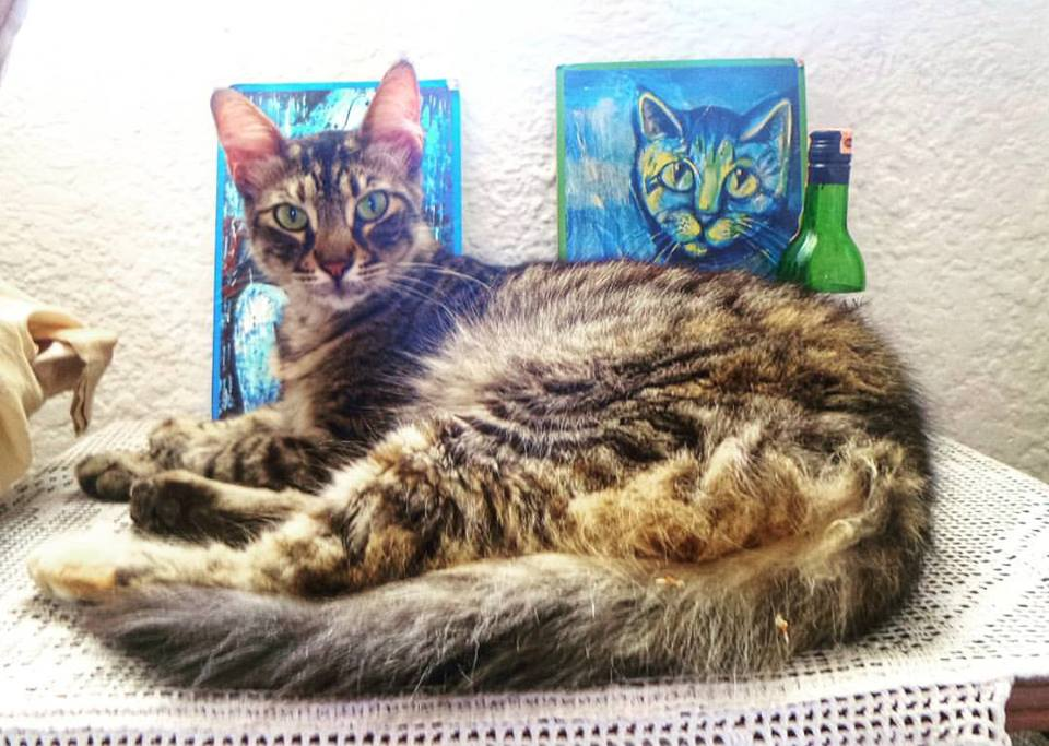 tekir-kedi