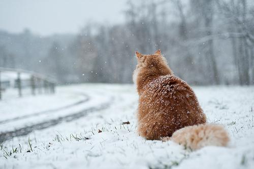 yalnız-kedi