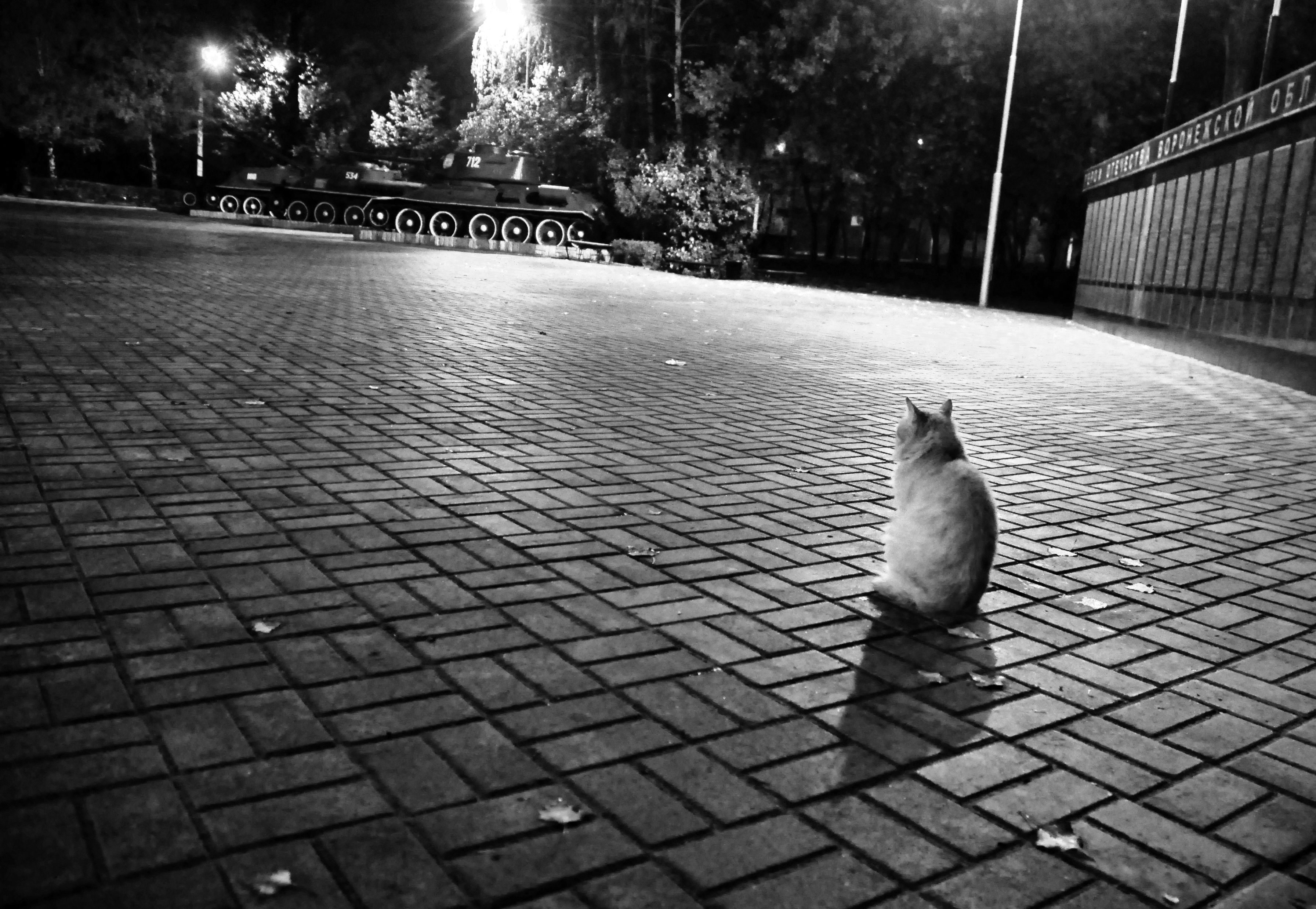 yalnız kedi