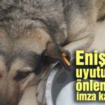 Enişte'nin uyutulmasını önlemek için kampanya