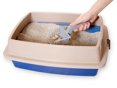 kedi-kum-kabı-temizliği
