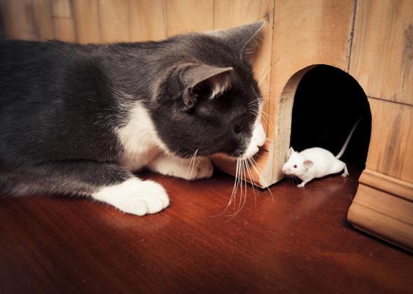 kediler-neden-olu-hayvan-getirir
