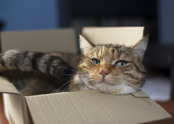 kediler-neden-kutulari-sever