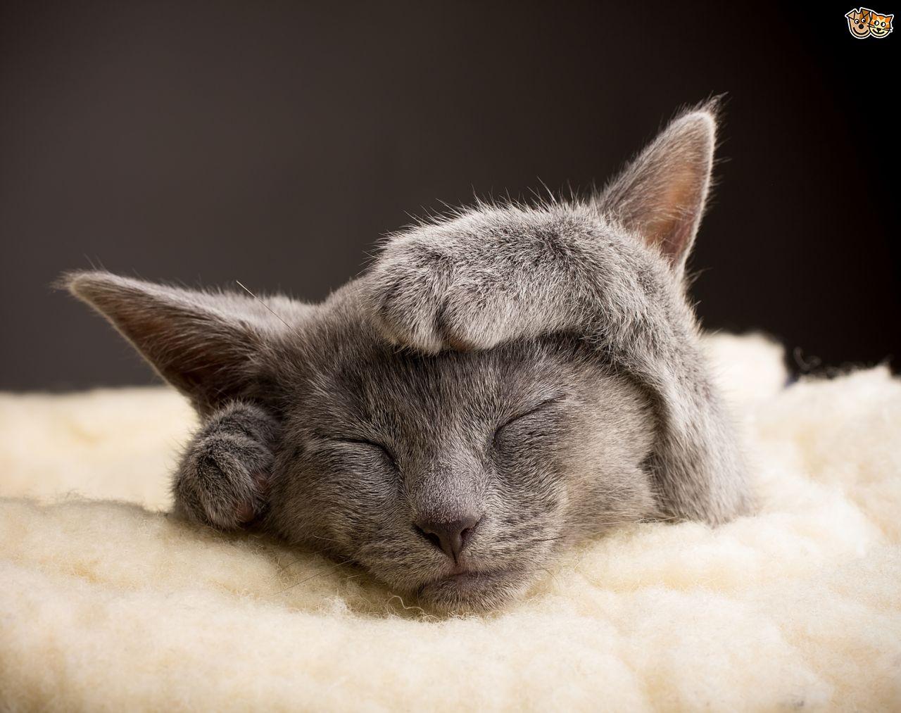 kediler-neden-mırlar-2