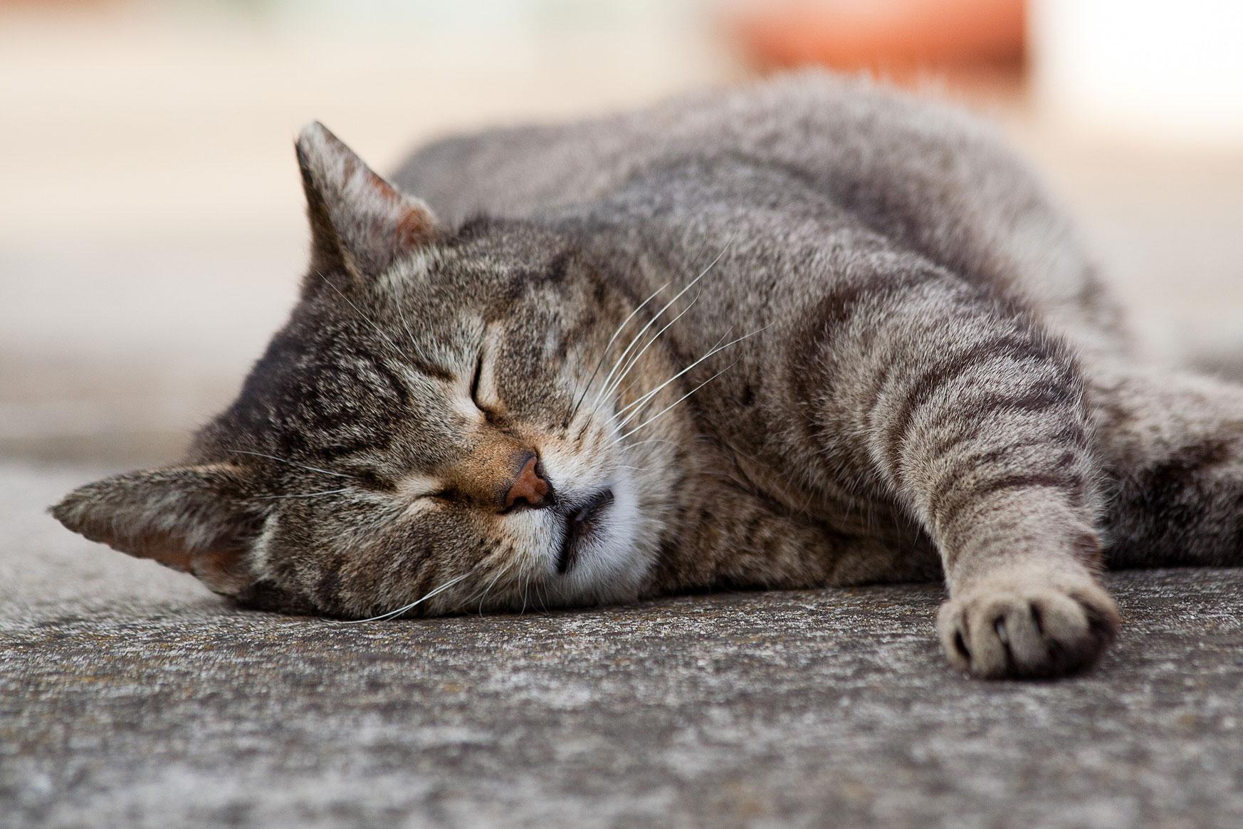 kediler-neden-mırlar-3