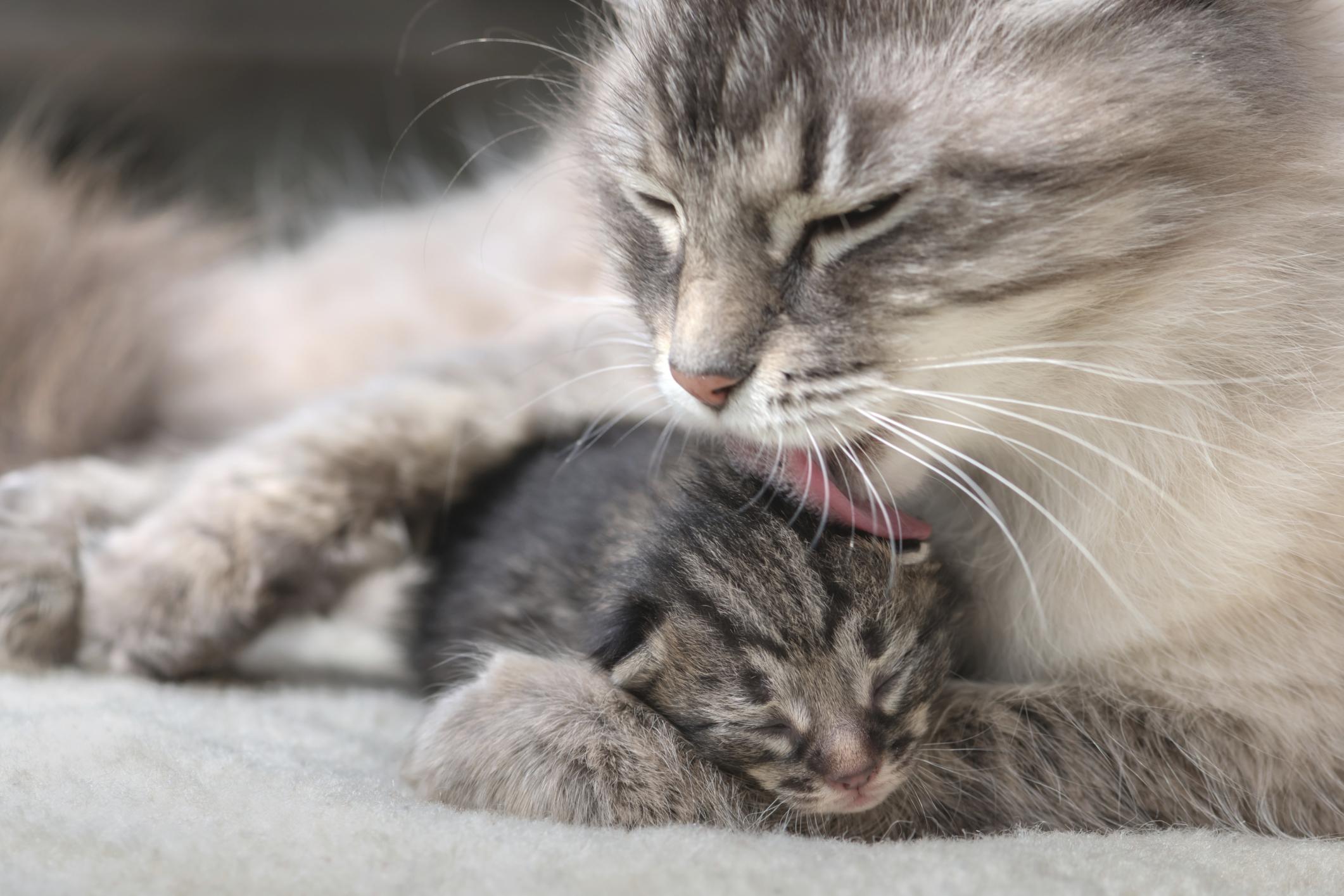 kediler-neden-mırlar