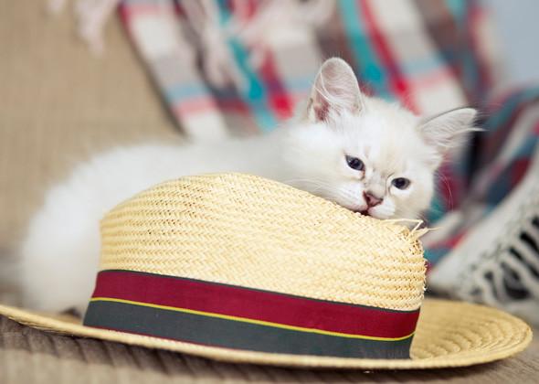 kediler-neden-plastik-yer