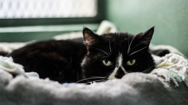 Kedi nasıl ve neden öfkeleniyor