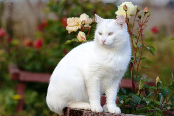 kedilerde-gunes-yanigi