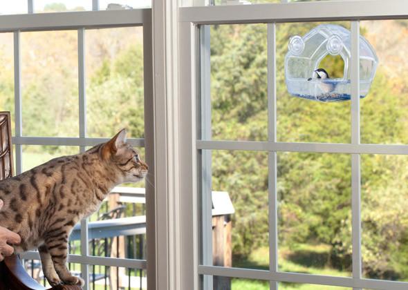 kedilerin-acayip-davranislari-ve-anlamlari