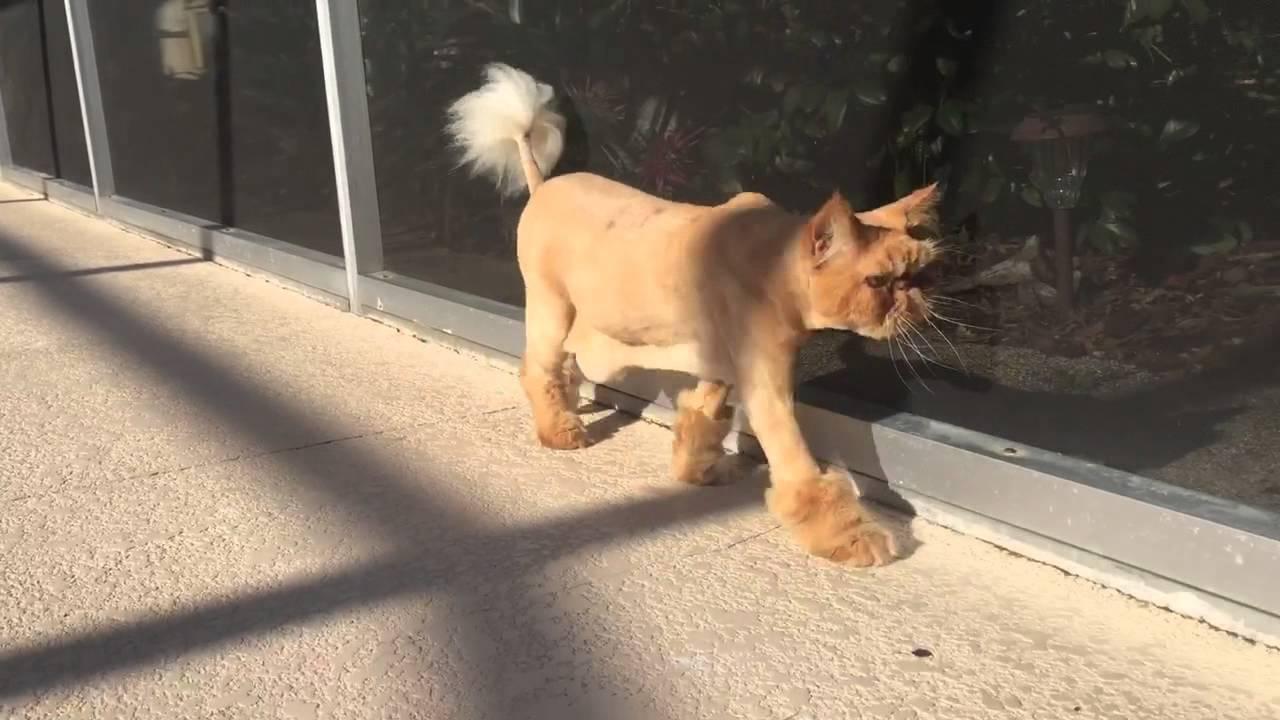 tiras-edilmis-kedi