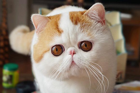 snoopy-kedi